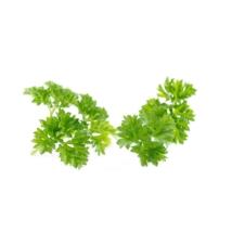Petrezselyem zöld 1000g